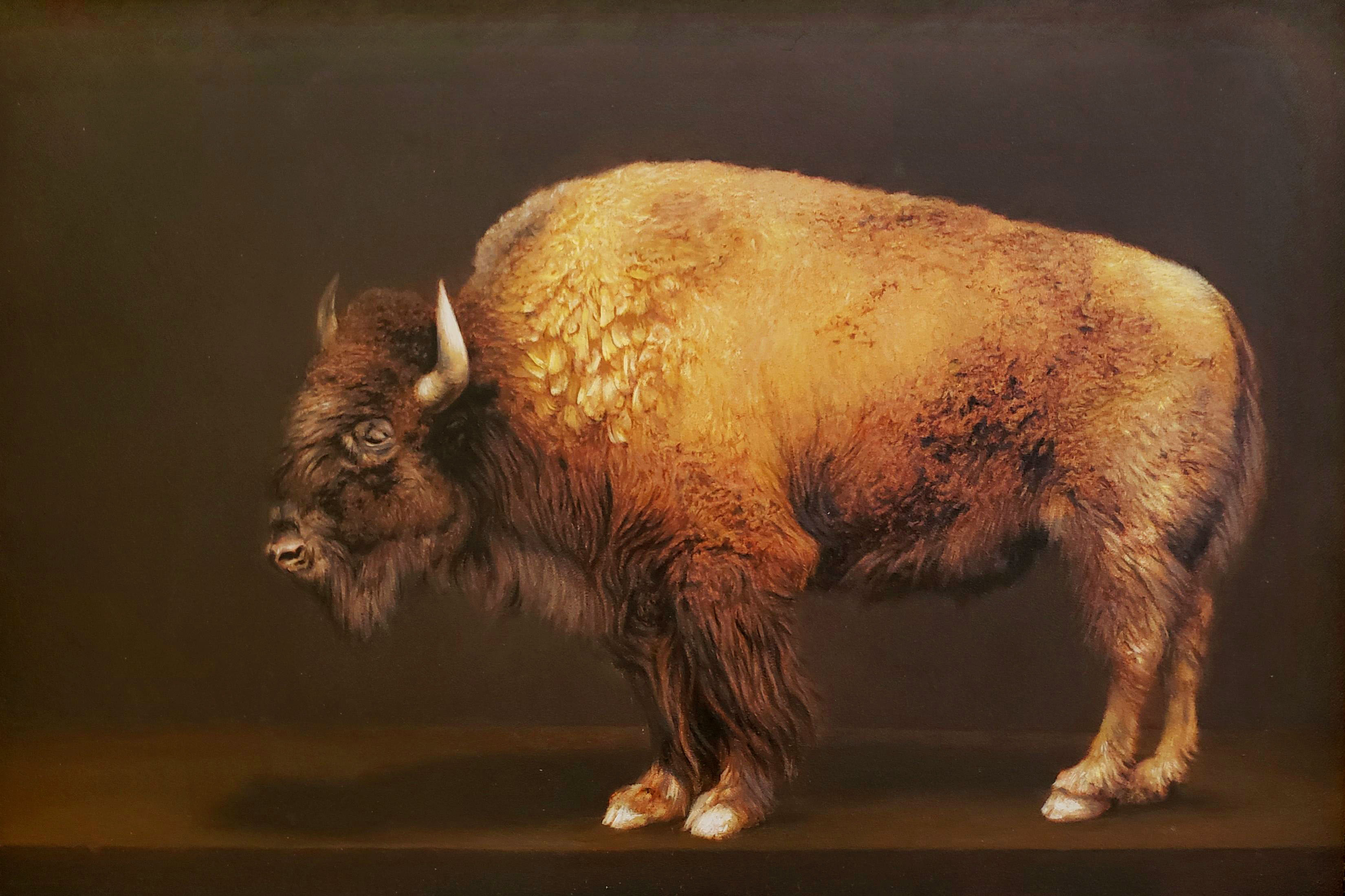 Murdock Bison 72